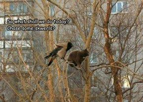 So what shall we do today? Chase some skwerls?