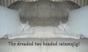 The dreaded two headed catamajig!