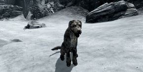 Skyrim Player Composes Eye-Watering Saga on His Harrowing Quest to Adopt a Virtual Dog