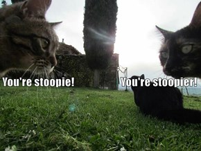 Such Sophisticated Arguments My Cats Have