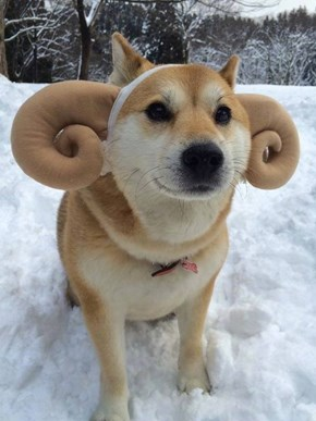 Doge Ram's Latest Model is a Little Ruff