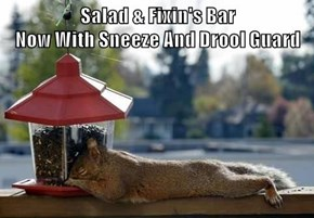 Salad & Fixin's Bar                                                         Now With Sneeze And Drool Guard
