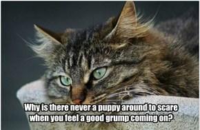 Dog-gone puppies!