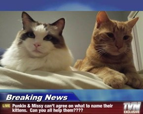 Breaking News - Punkin & Missy can't agree on what to name their kittens.  Can you all help them????