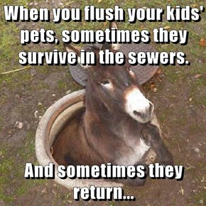 When you flush your kids' pets, sometimes they survive in the sewers.  And sometimes they return...