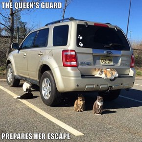 THE QUEEN'S GUARD  PREPARES HER ESCAPE