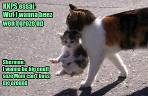 Little Kitty Has BIG Dreams