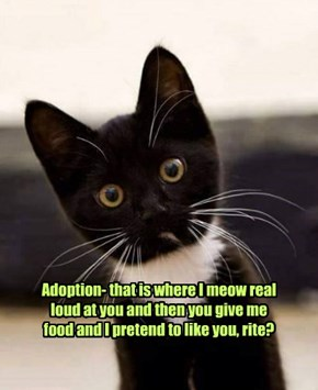 Adoption- the sweetest trap