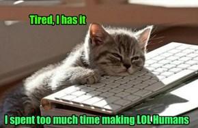 I should has taken a catnap instead