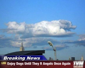 Breaking News - Enjoy Dogs Until They R Angels Once Again