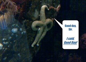 Indignant Starfish Is Indignant