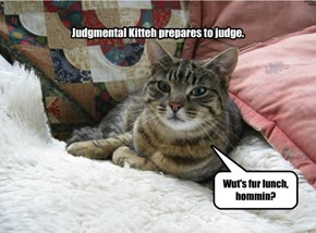Judgmental Kitteh Is Judgy.
