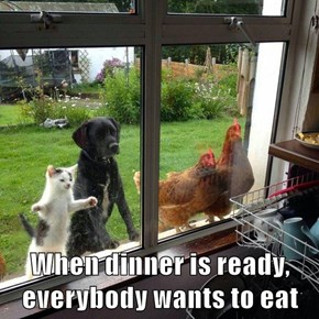 When dinner is ready, everybody wants to eat