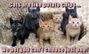 Cats are like potato chips ...  we bet you can't choose just one!