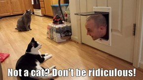 Not a cat? Don't be ridiculous!