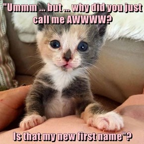 """Ummm ... but ... why did you just call me AWWWW?  Is that my new first name""?"