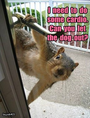 I  need  to  do  some  cardio.   Can  you  let  the  dog  out?