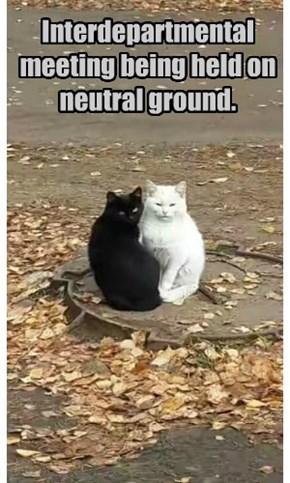 Interdepartmental meeting being held on neutral ground.