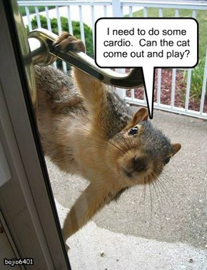 I need to do some cardio.  Can the cat come out and play?
