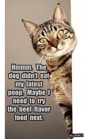 Hmmm.   The  dog  didn't  eat  my  latest  poop.   Maybe  I  need  to  try  the  beef  flavor  food  next.
