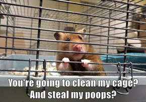 You're going to clean my cage? And steal my poops?
