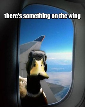 duckmare at 20,000 feet