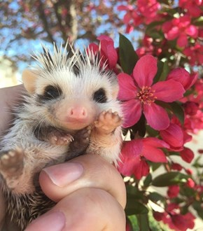 Baby Sonic the Hedgehog