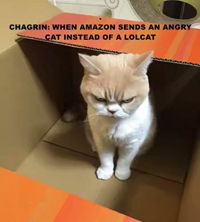 .                                                                      CHAGRIN: WHEN AMAZON SENDS AN ANGRY CAT INSTEAD OF A LOLCAT