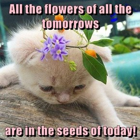 All the flowers of all the tomorrows  are in the seeds of today!