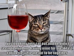 I just took my new cat out and he didn't seem to mind me having wine for breakfast. I think we were meant to be together