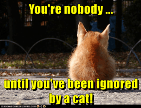 You're nobody ...  until you've been ignored by a cat!