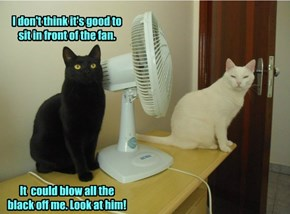 I don't think it's good to sit in front of the fan.            It  could blow all the black off me. Look at him!