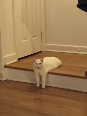 Awkward Sitting Cat Gets Photoshopped Into Super Weird Situations