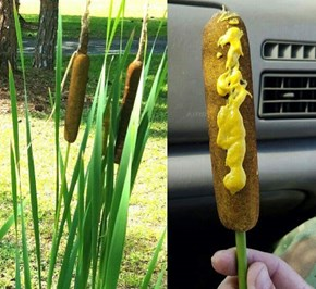 Ever Wonder Where Corn Dogs Come From?