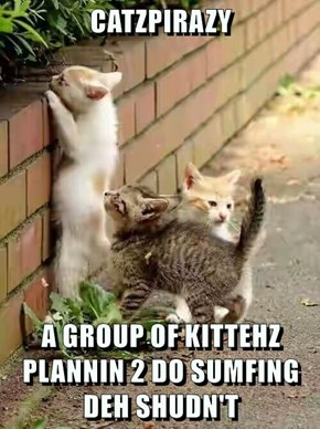 CATZPIRAZY  A GROUP OF KITTEHZ PLANNIN 2 DO SUMFING DEH SHUDN'T