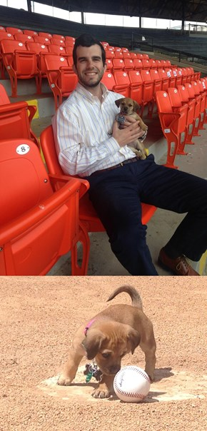 Puppy That Was Abandoned at a Baseball Stadium Gets Adopted by the Team