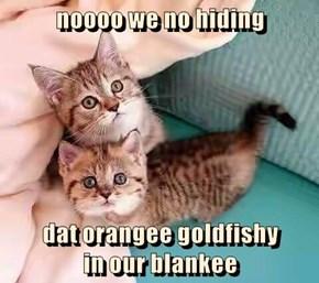 noooo we no hiding   dat orangee goldfishy                                           in our blankee