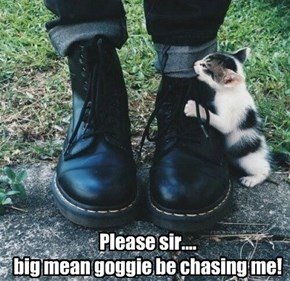 Please sir....  big mean goggie be chasing me!