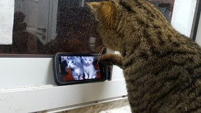 Even Cats Like Looking at Cats on the Internet