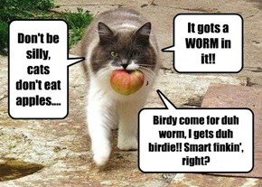 Don't be silly, cats don't eat apples....