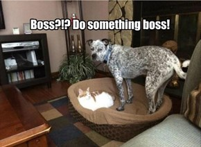 Boss?!? Do something boss!