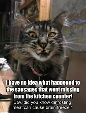I have no idea what happened to the sausages that went missing from the kitchen counter!