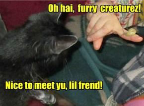 Nice to meet yu, lil frend!