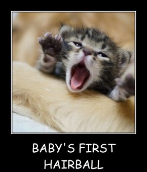 BABY'S FIRST HAIRBALL