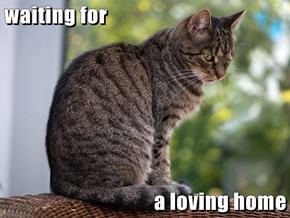 waiting for  a loving home