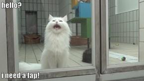 hello?  i need a lap!