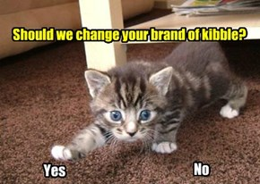 Putting It To A One-kitten Vote