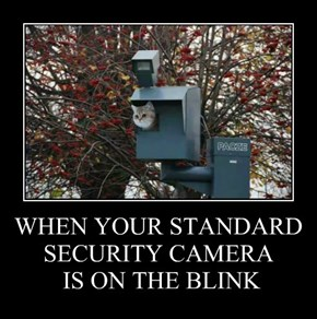 WHEN YOUR STANDARD SECURITY CAMERA  IS ON THE BLINK