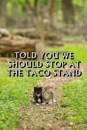 TOLD YOU WE SHOULD STOP AT THE TACO STAND