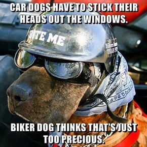 CAR DOGS HAVE TO STICK THEIR HEADS OUT THE WINDOWS.  BIKER DOG THINKS THAT'S JUST TOO PRECIOUS.